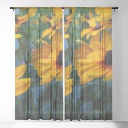 black-eyed susan Sheer Curtain