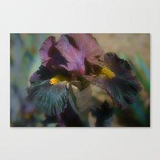velvet iris Canvas Print