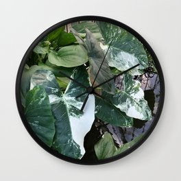 CONSERVATORY VI Wall Clock