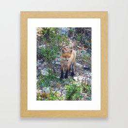 fox 2018-8 Framed Art Print