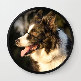 Border Collie in Natural Light Wall Clock