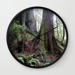 Giant Redwoods Rainforest 04 Wall Clock