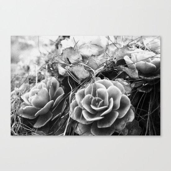 succulents soul Canvas Print