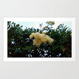 Little Yellow Flowers Art Print