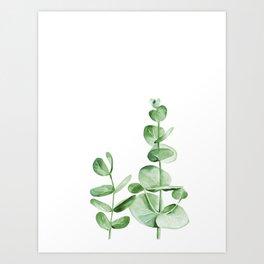 Eucalyptus branches. Watercolor illustration on white. Art Print
