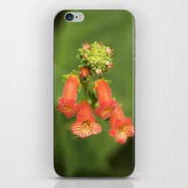 Kohleria from Bud to Bloom iPhone Skin