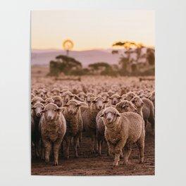 Dinner Time Sheep Poster