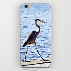 Blue Heron Strut iPhone & iPod Skin