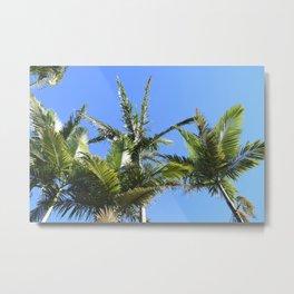 Queensland Palmtrees Colour Metal Print