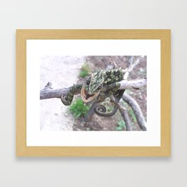 Colourful Chameleon Wrapped Around A Branch Framed Art Print