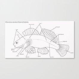 Anatomy of a Darter Canvas Print