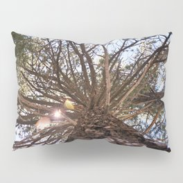 Never Stop Looking Up (Tree 1) Pillow Sham