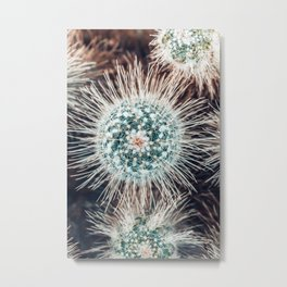 Cactus Study #1 Metal Print