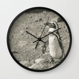 Black and White African Penguin Wall Clock