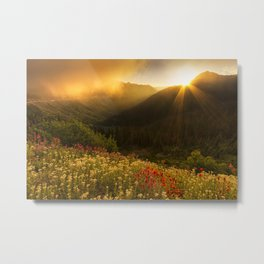 Bathed in Light Metal Print