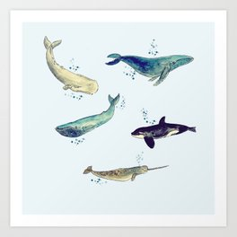 Bubbly whales Art Print