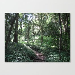 Forest Walks 3 Canvas Print