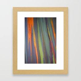 Rainbow Eucalyptus Magic Framed Art Print