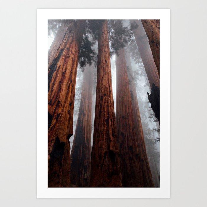 Woodley Forest Kunstdrucke