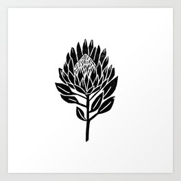 Linocut Protea floral black and white minimal flower spring Art Print