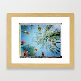 pinhole-ins 93, spring... it's time for tulips to rise Framed Art Print