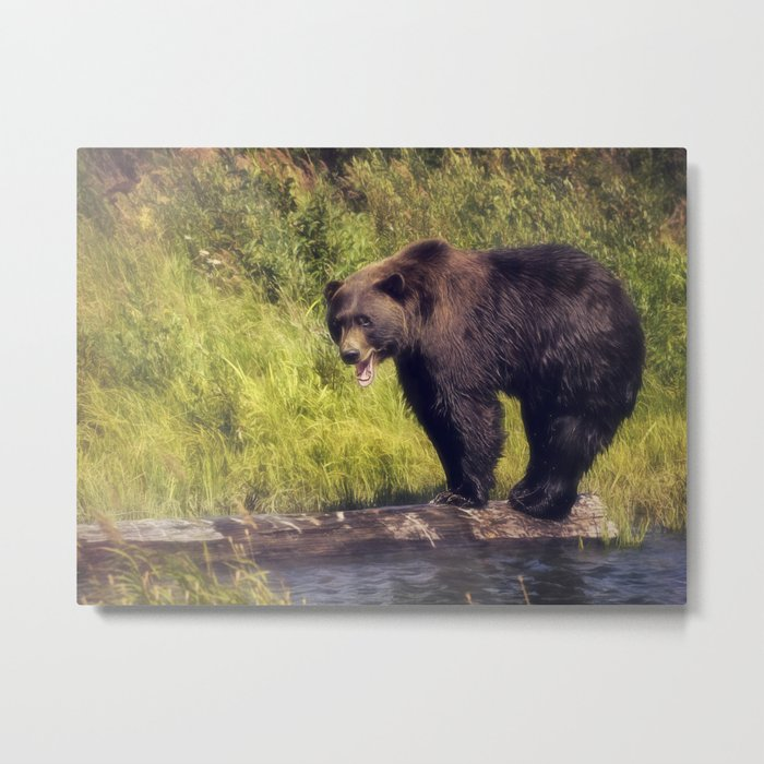 Alaskan Brown Bear Metal Print