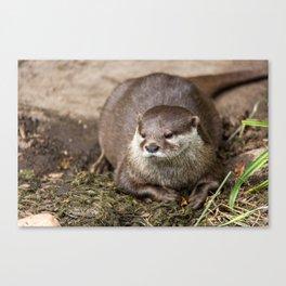 Sunning Otter Canvas Print
