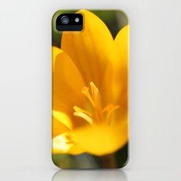 Krokusse iPhone Case