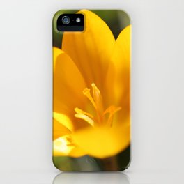 Krokusse iPhone Case