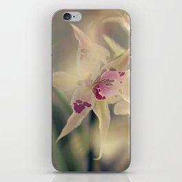 Sweet arlequin iPhone Skin