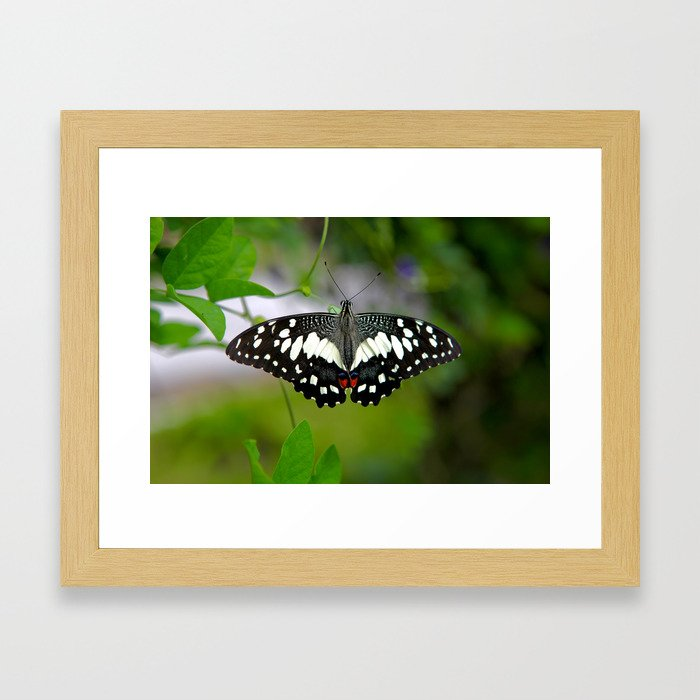 Butterfly Large Framed Art Print