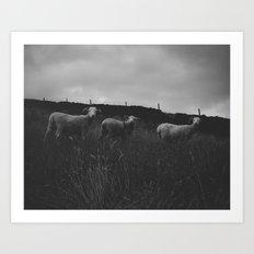 Sheep on the meadow in Peak District Art Print