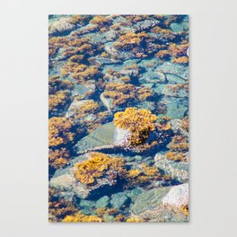 Low Tide Seagrass Canvas Print