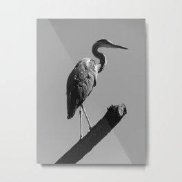 desert bird Metal Print