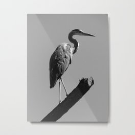 desert bird Metal Print