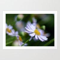 flower with raindrops  Art Print