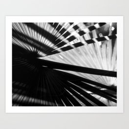 Crossed Palms Art Print