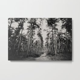 the path through the forest ... Metal Print