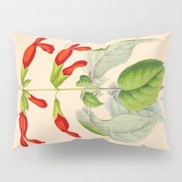 Salvia gesneriflora Vintage Botanical Floral Flower Plant Scientific Illustration Pillow Sham