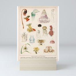 Adolphe Millot - Mollusques 02 - French vintage zoology illustration Mini Art Print
