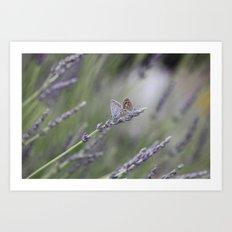 Lavender Butterflies - JUSTART © Art Print