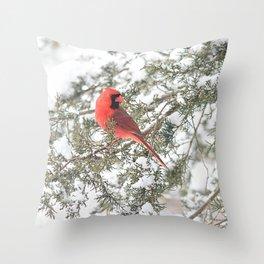 Cardinal on a Snowy Cedar Branch (sq) Throw Pillow