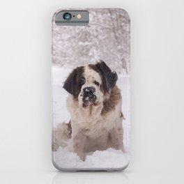 St Bernard dog on the snow iPhone Case