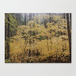 Hidden Gold Canvas Print
