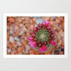 El color del desierto Art Print