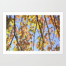 Autumn Leaves No 1 Art Print