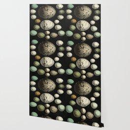 Naturalist Eggs Wallpaper