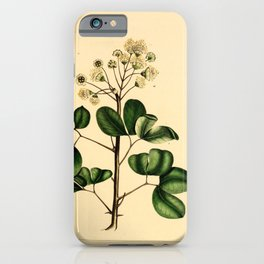 Blung leaved Inga, inga unguis cati Redoute Roses 3 iPhone Case