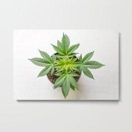 Marijuana Landscape Metal Print