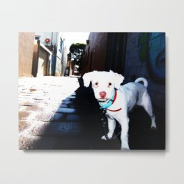 Alley Dog Metal Print